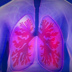 Rubrique mensuelle du bien-être : les poumons