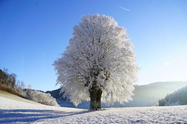 Massage du ventre pour préparer l'hiver